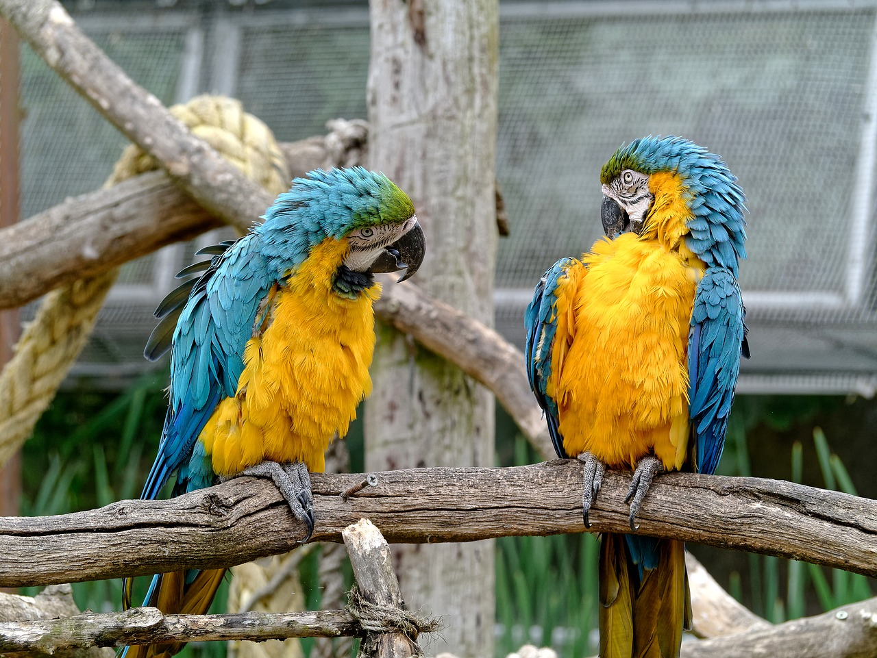 Social media content ideas - parrots having a conversation